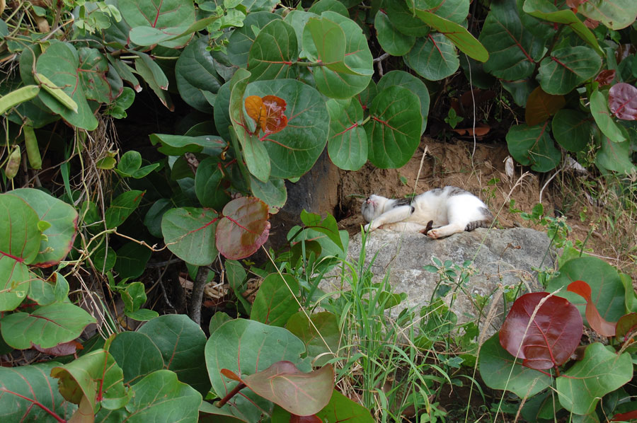 Los Gatos de San Juan love to relax in the bushes.
