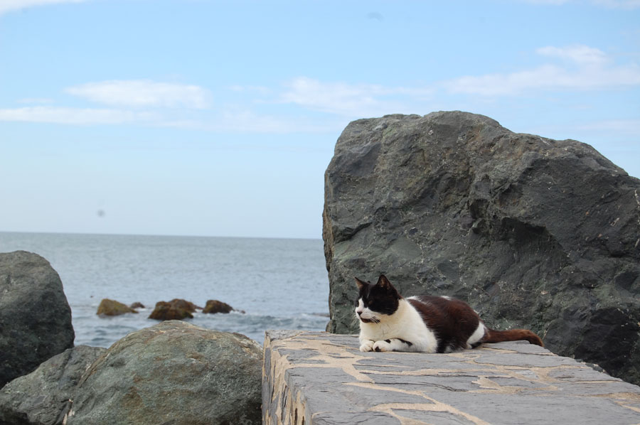 Resting by the ocean, this cat of San Juan enjoys the scenery.