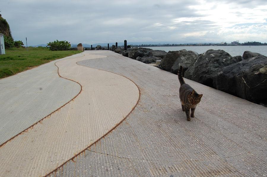 Walk the walk and talk the talk of the cats in San Juan.