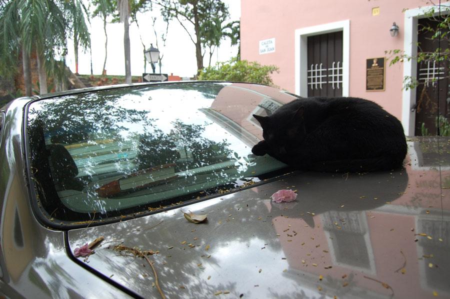 Los Gatos de San Juan will relax and sleep anywhere.