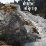 Mammoth Hot Springs and the Boiling River