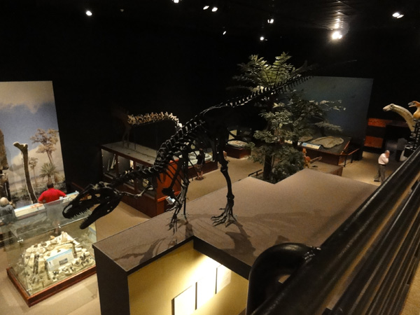 museum-of-the-rockies-merevin-05