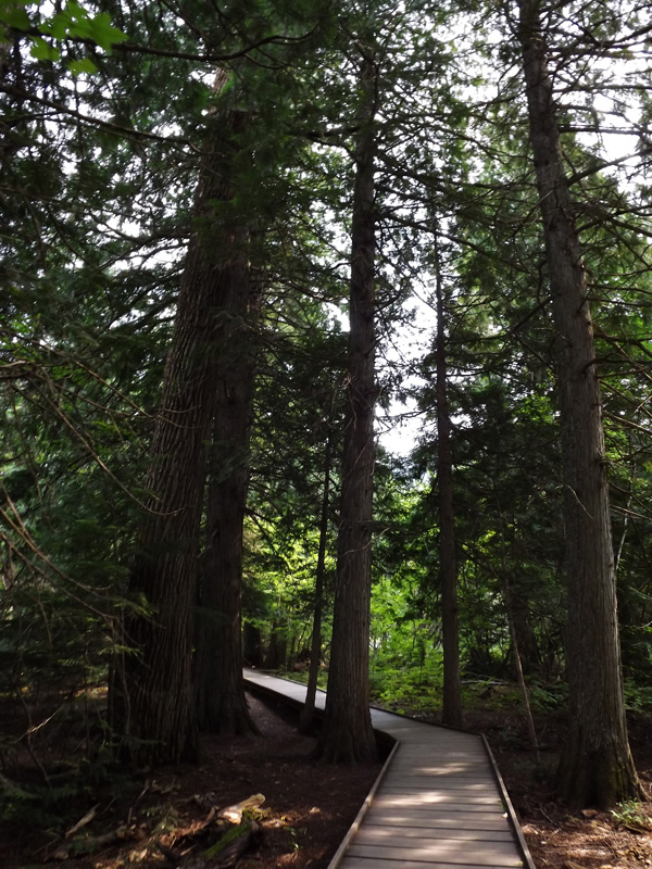 A beautiful boardwalk through the Trail of the Cedars leading to a perfect spot for a proposal.