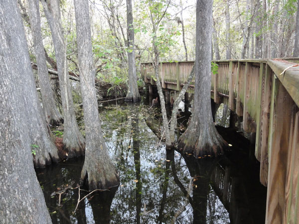 big-cypress-national-preserve-merevin-23