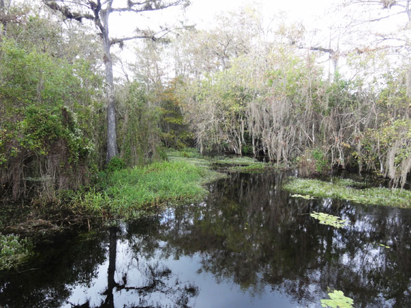 big-cypress-national-preserve-merevin-28