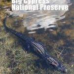 Big Cypress National Preserve with Merevin