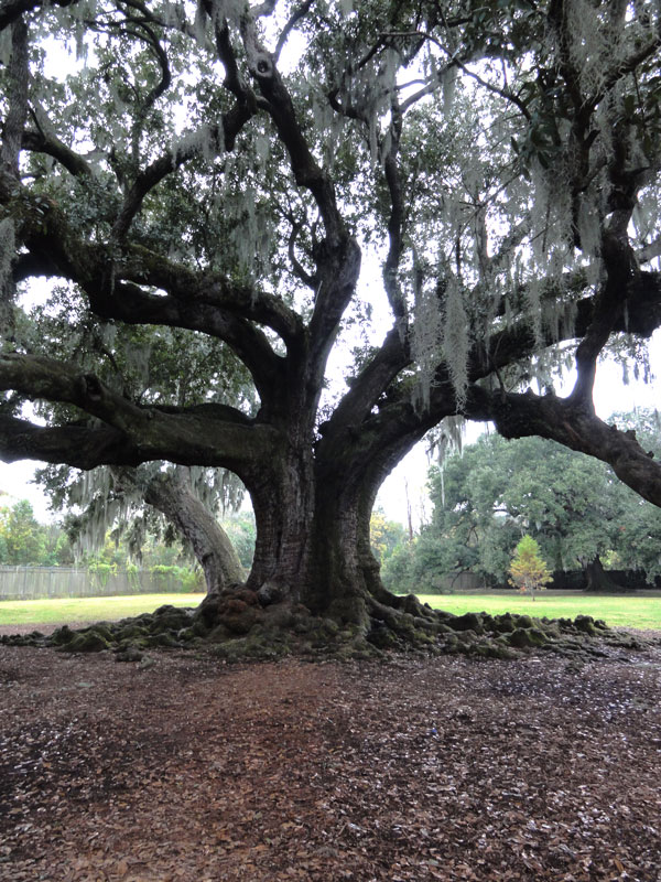 tree-of-life-new-orleans-merevin-03