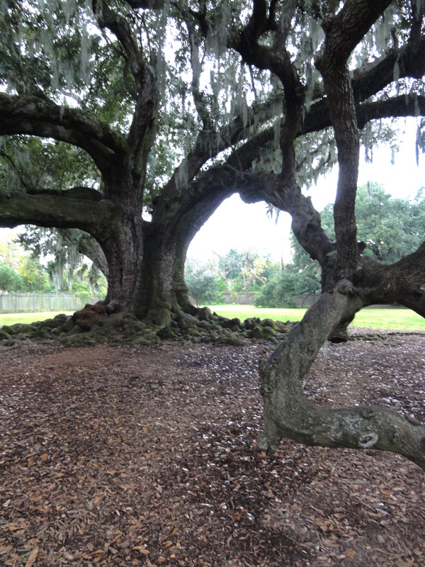 tree-of-life-new-orleans-merevin-04
