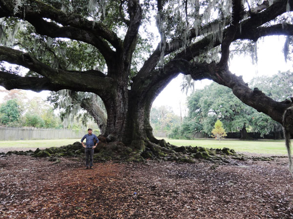 tree-of-life-new-orleans-merevin-05