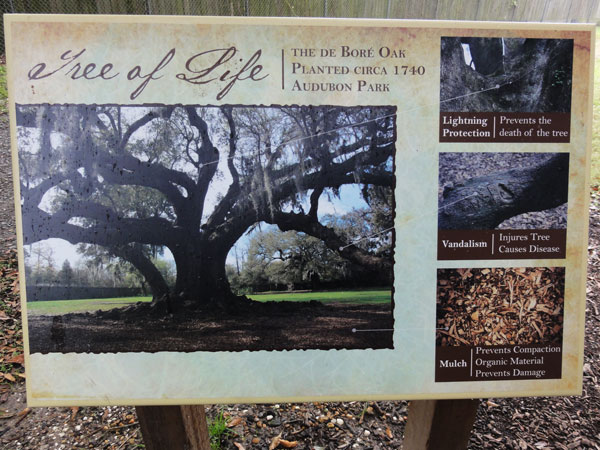tree-of-life-new-orleans-merevin-11