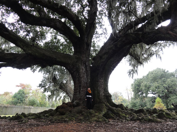 tree-of-life-new-orleans-merevin-12