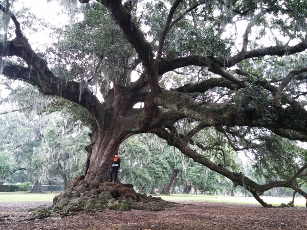 tree-of-life-new-orleans-merevin-15