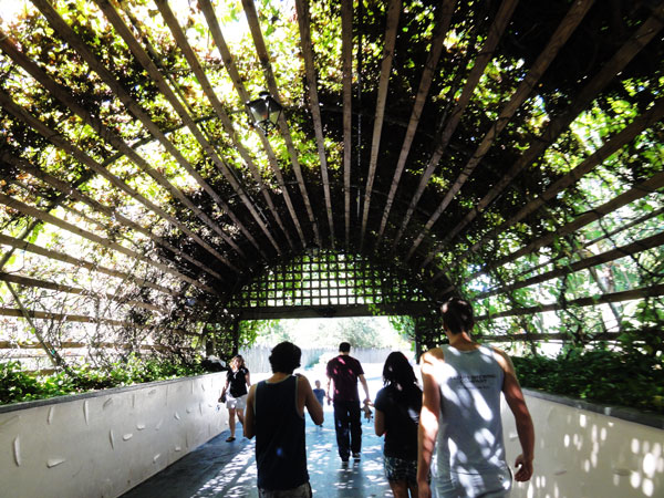 busch-gardens-tampa-merevin-14