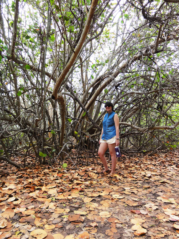 Meredith Lambert enjoys the shade provided by the sea grapes at Bill Baggs Florida State Park.