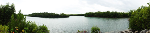 A panoramic view of the mangrove estuary at Bill Baggs Florida State Park.