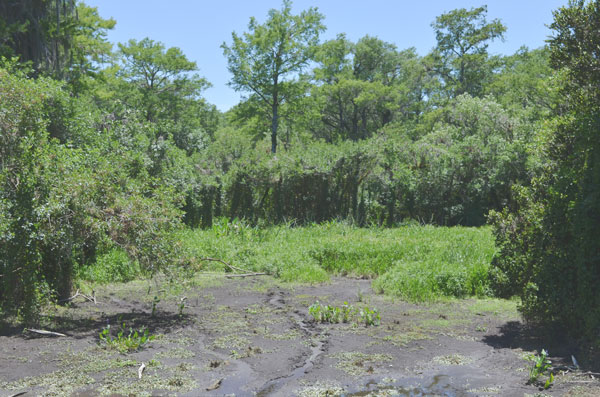 The water level in Big Cypress National Preserve is very low during the dry season.