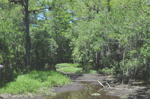 The low water level of the dry season in Big Cypress National Preserve.