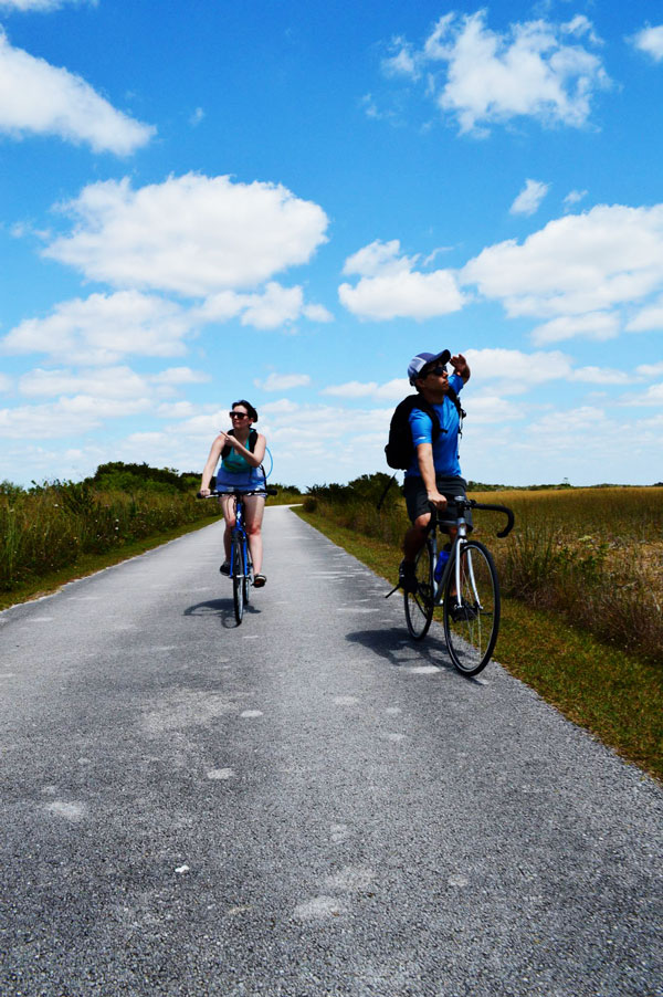 Biking the 15 mile loop at Shark Valley in the Everglades and documenting it on a Miami travel blog.