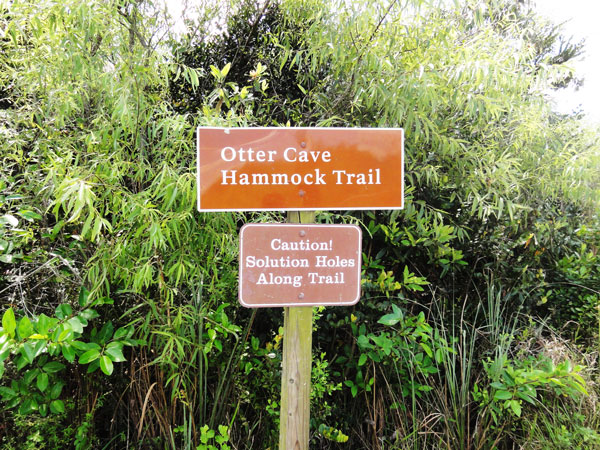 Otter Cave Hammock Trail on Shark Valley is short, but very interesting.