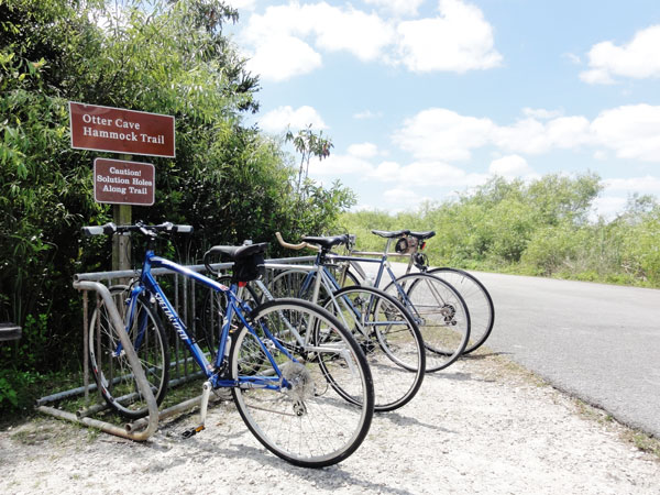 Biking Shark Valley is a rewarding outdoor activity in Miami.