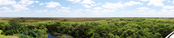 A panoramic view of the Everglades as seen from the top of the Shark Valley Observation Tower.