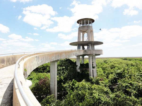 The Shark Valley Observation Tower stands tall over the Everglades.