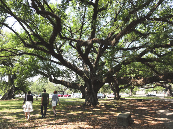 Miami travel blogger, Meredith Lambert explores the larger than life oak trees in City Park.
