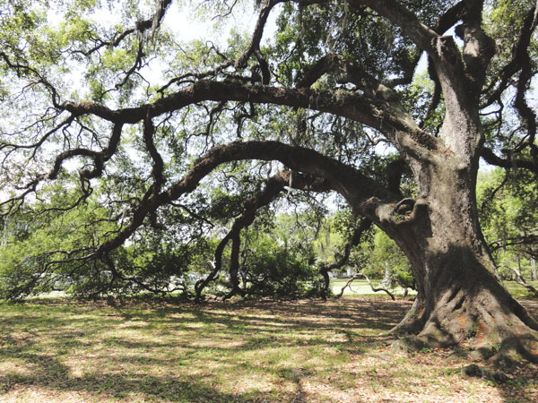 Grand old oak trees stand tall in the Oak Alley at City Park in New Orleans.