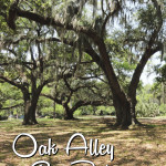 The Oak Alley at City Park