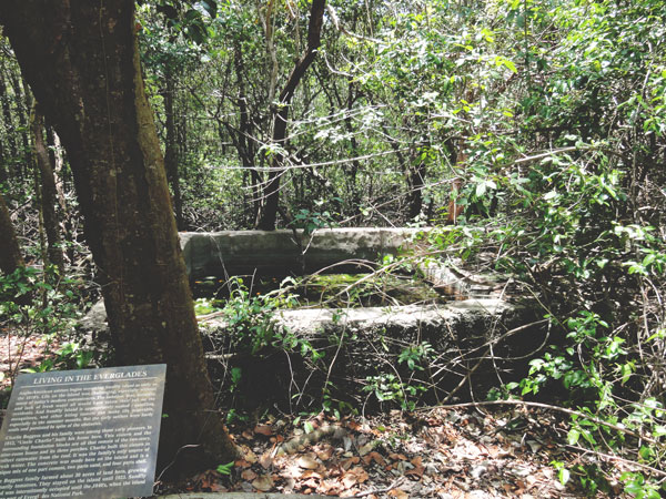 Remnants of the people that created and lived on Sandfly Island in the Everglades.