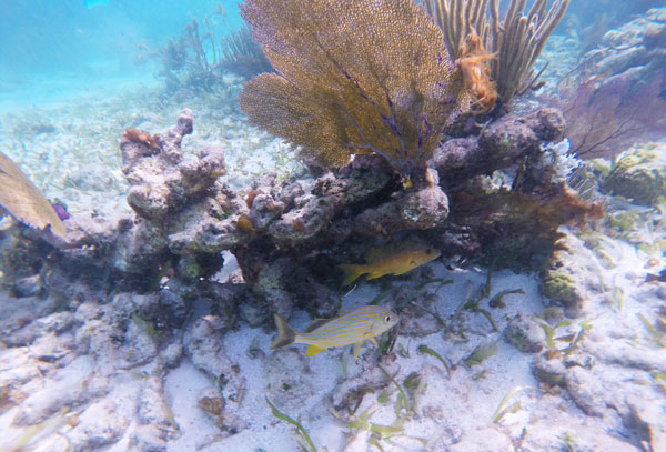 The Grecian Rocks are teeming with life as larger fish brave the more open water.
