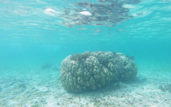 A large chunk of coral stands alone in the shallow water of the Grecian Rocks.