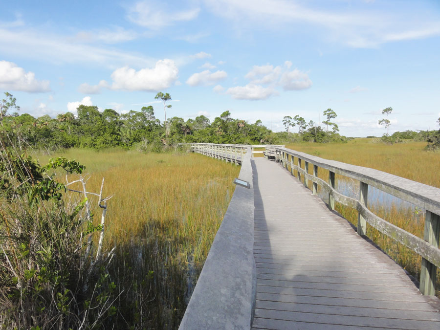 There are many different types of trails in the Everglades that lead into the wild.
