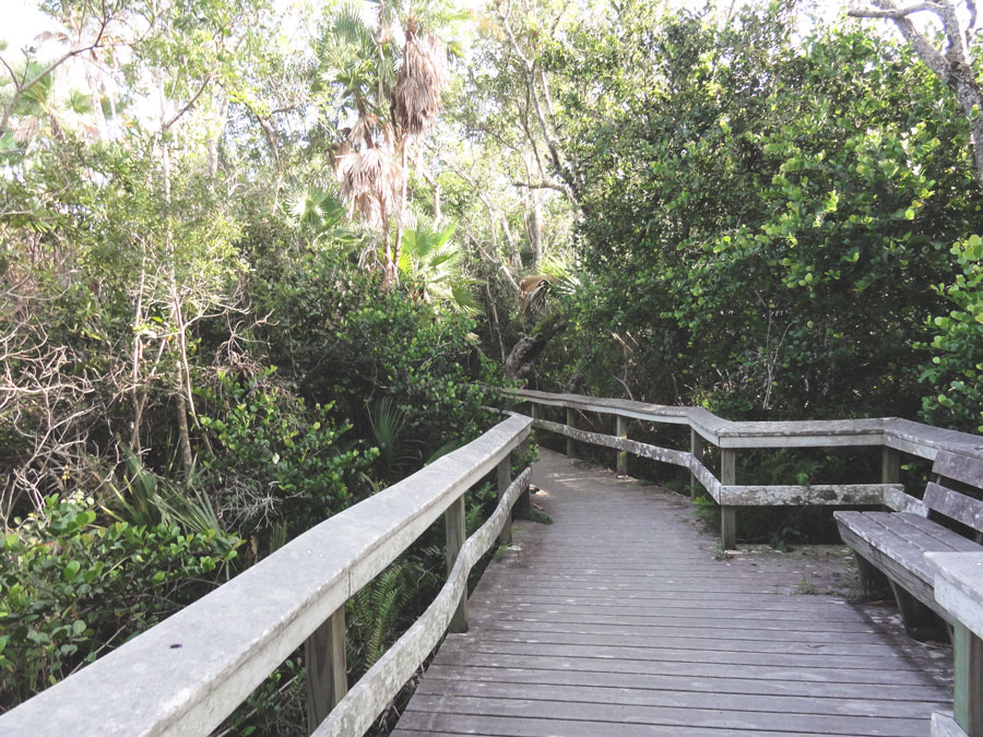 Predetermined paths are the only way to penetrate the thick Everglades growth.