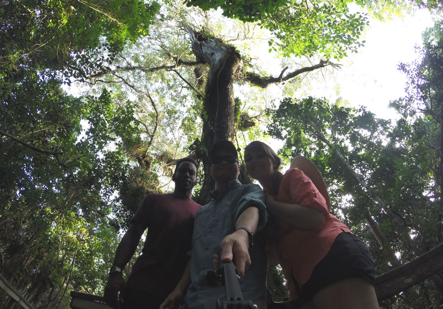 Meredith Lambert, Kevin Banogon, and Devin Thompson take a Gopro selfie with the largest Mahogany Tree in the United States.
