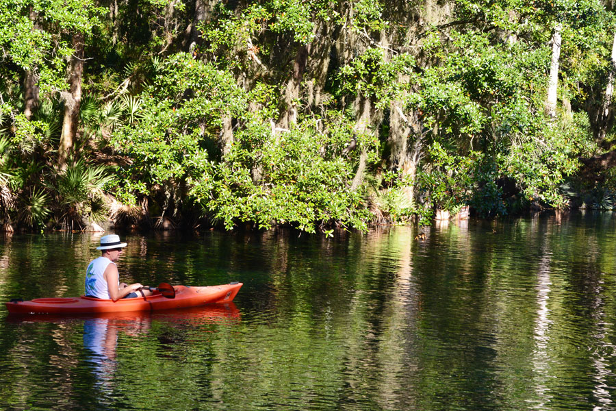 A man kayaking around the manatees of Blue Springs State Park.