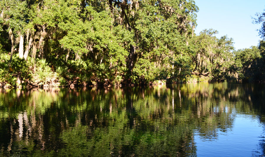 The calm clear water of Blue Springs is very reflective in the morning light.