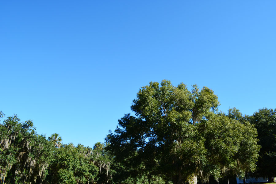 A gorgeous day for an Orlando day trip to Blue Springs State Park in the fall.