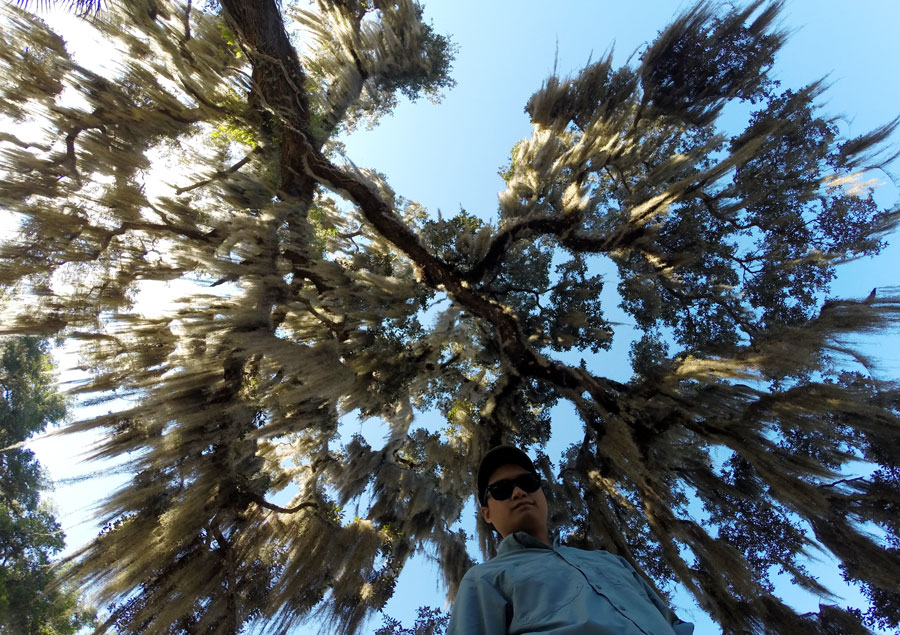 Looking up at the spanish moss on an oak tree with Kevin Banogon.