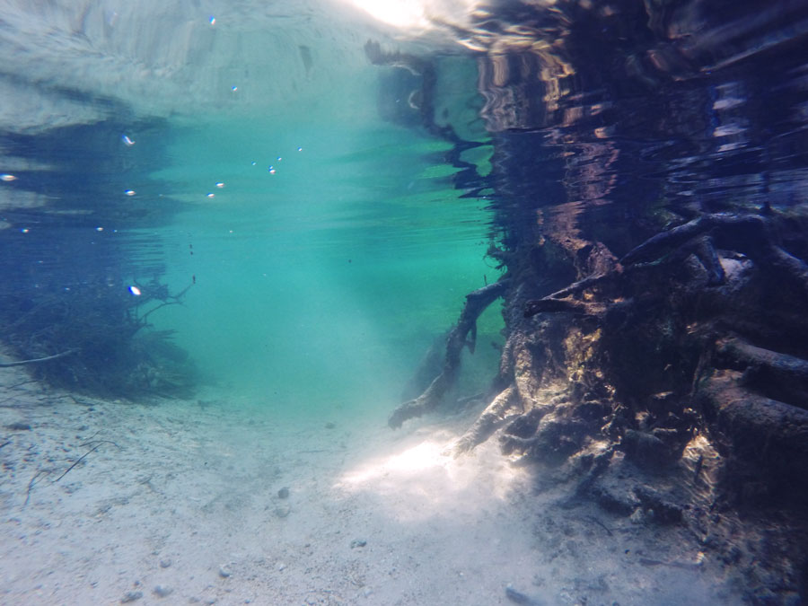 The underwater world of Blue Springs State Park is peaceful and quiet.
