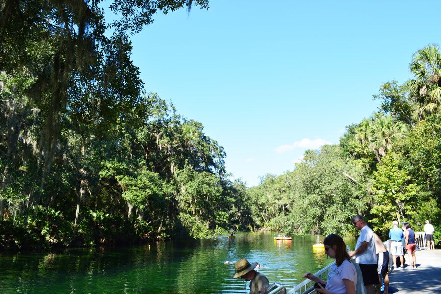 Blue Springs is a large and natural spring only a half an hour outside of Orlando.