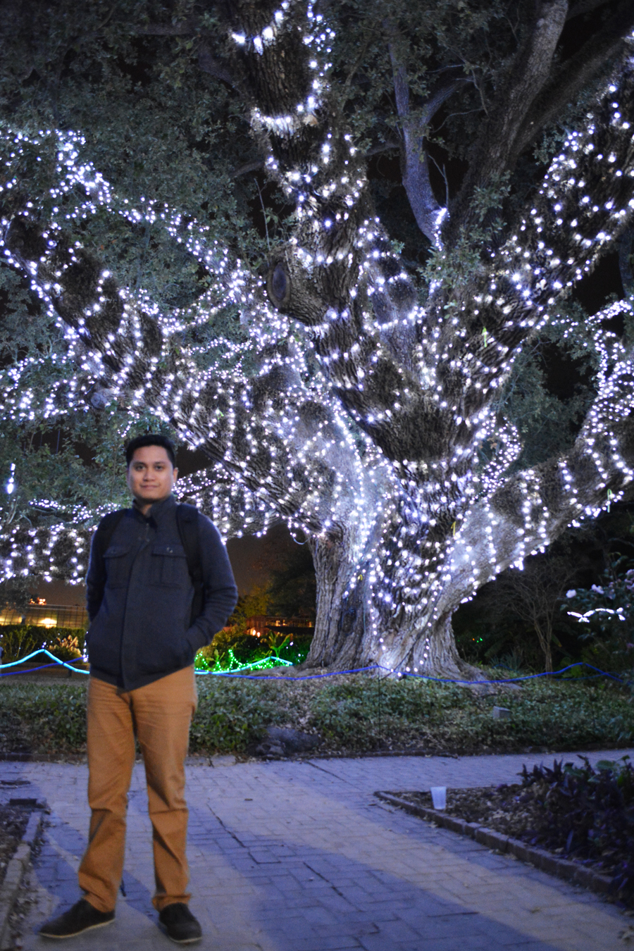 Kevin Banogon stands in front of the Enrique Alferez Oak adorned in lights in City Park.