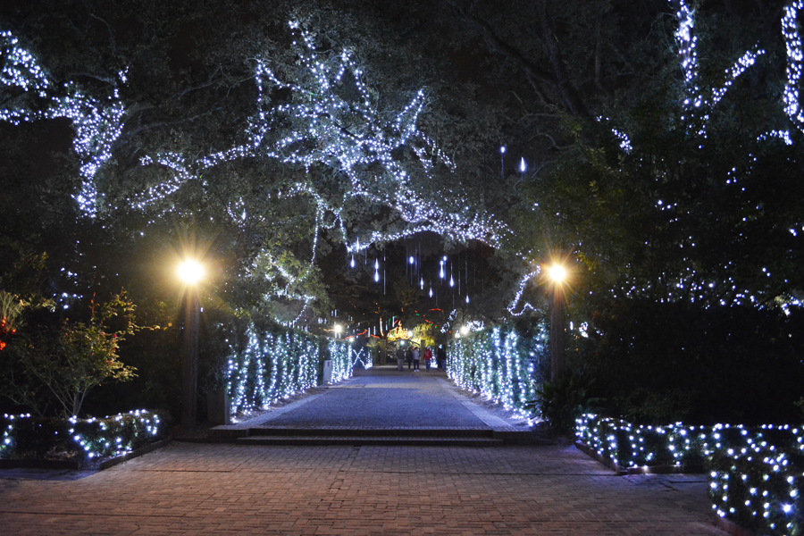 The reaching branches of the Enrique Alferez Oak draped in lights in City Park.