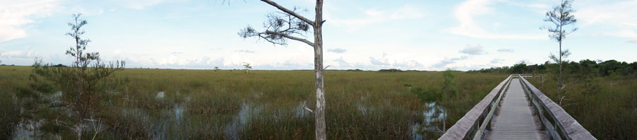A panoramic view of the peace found in The Everglades.