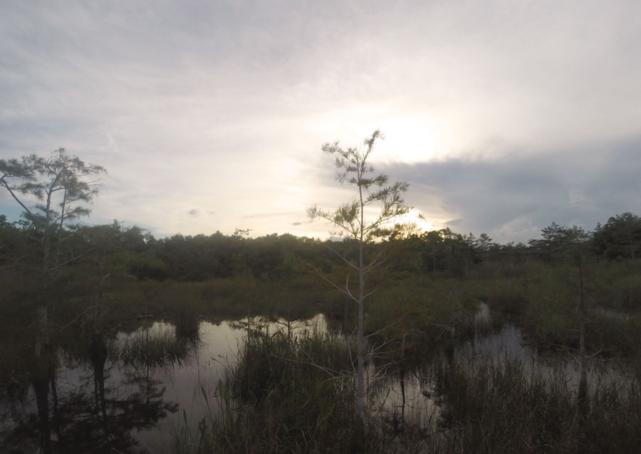 The peace that comes with a sunset in The Everglades.