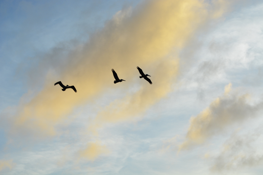 Birds fly across the sky at sunset on Miami Beach at South Pointe Park.