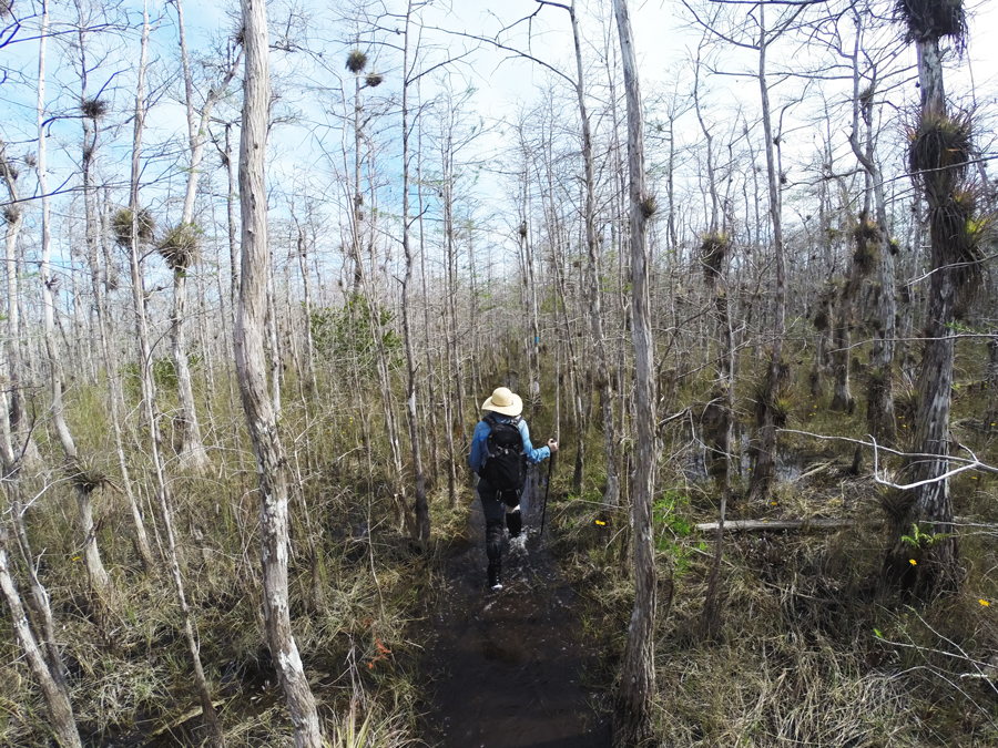 Meredith Lambert Banogon hikes a portion of the Florida Trail as she hikes to the big trees.