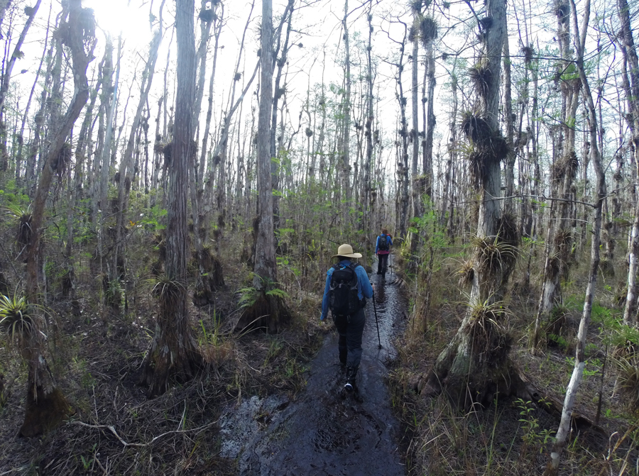 Meredith Lambert Banogon and Meghan Parks Baldor hike along the Florida Trail in Big Cypress National Preserve.