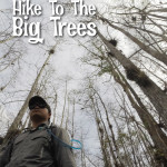 Hike to the Big Trees – A Florida Trail