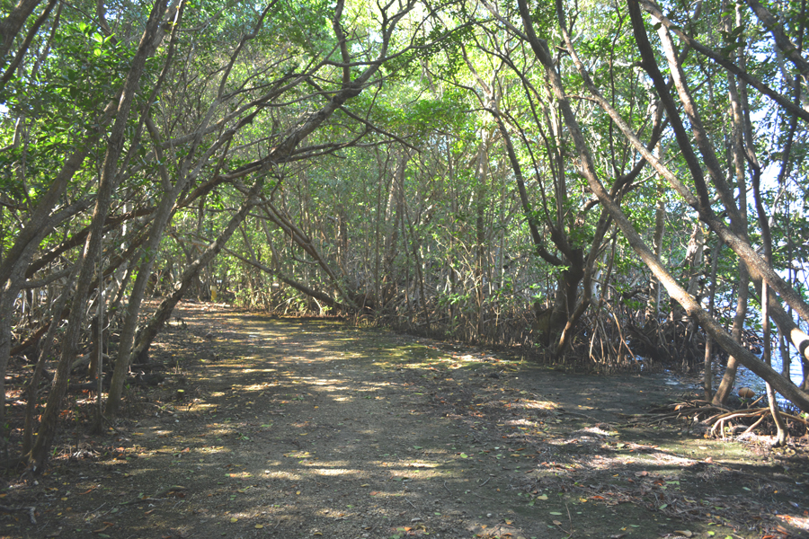 Nature trails right off the water at Matheson Hammock Park.